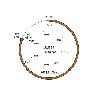 Adenovirus vector construction with AdenoQuick1.0
