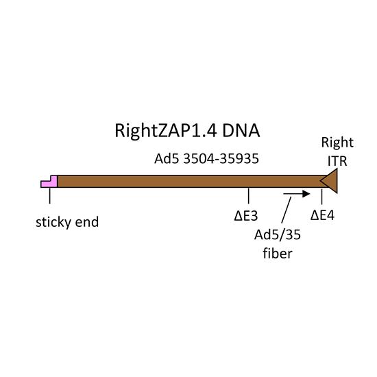 Adenovirus vector construction with AdenoZAP1.0