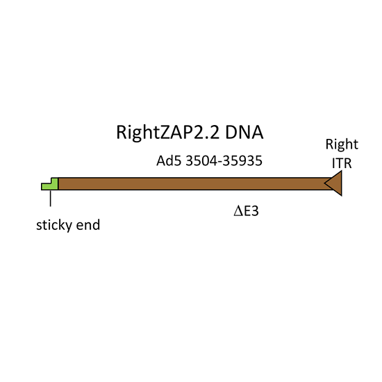 Adenovirus vector construction with AdenoZAP2.0