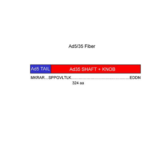 Shuttle vector for adenovirus vector construction