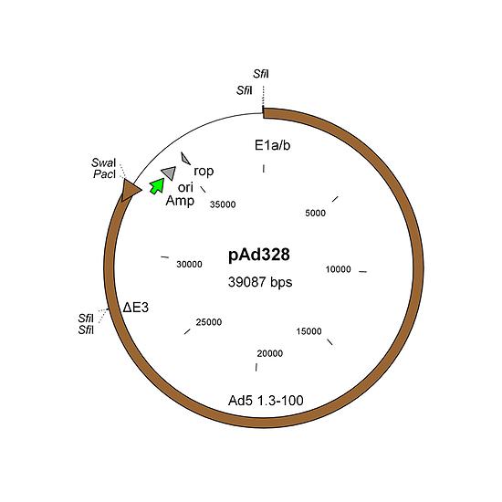 Construction of oncolytic adenovirus vectors with AdenoZAP1.0