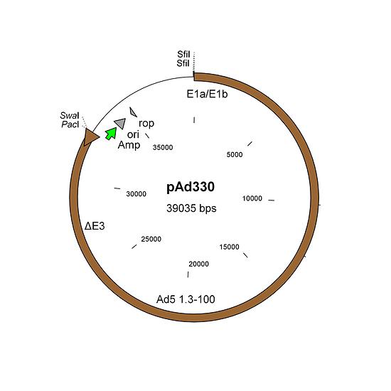 Construction of oncolytic adenovirus vectors with AdenoQuick1.0