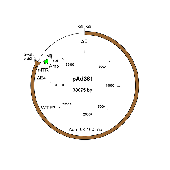 Construction of replication-deficient E1/E4-deleted adenovirus vectors using the AdenoQuick1.0 system