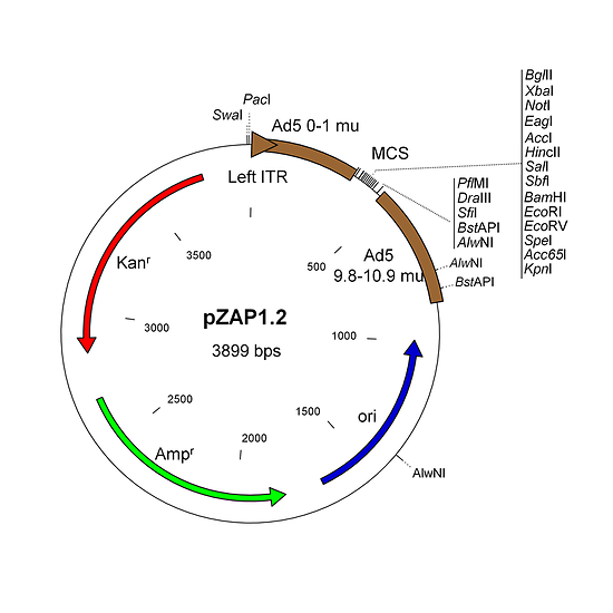 Shuttle plasmid for adenovirus vector construction