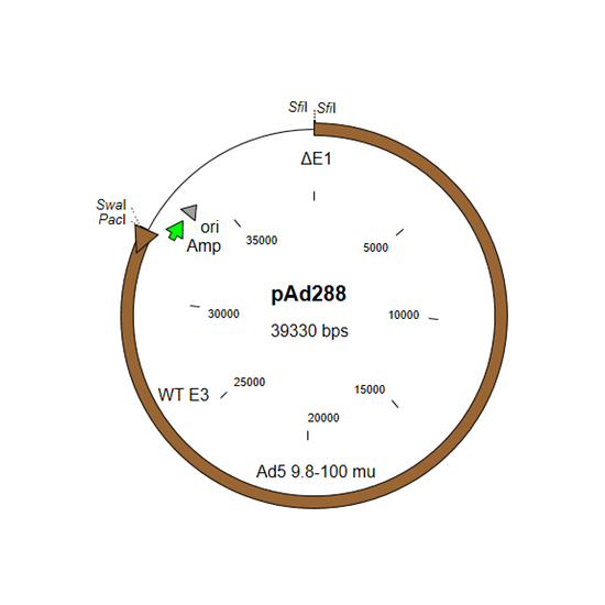 Map of pAd288