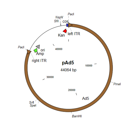 Plasmid with complete Ad5 genome